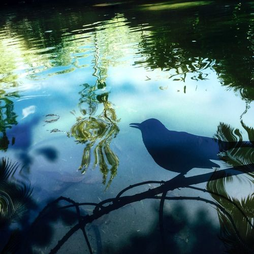 """""""Over trouble waters"""" Water Nature Beauty In Nature Outdoors Creativity Tranquil Scene Silhouette Green Color bird Creative Artdesign By Me"""