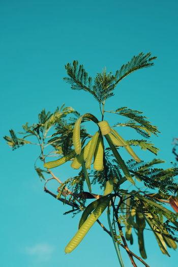 Tree Palm Tree Flower Blue Flower Head Sky Close-up Plant Plant Life