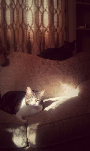 My Kitties