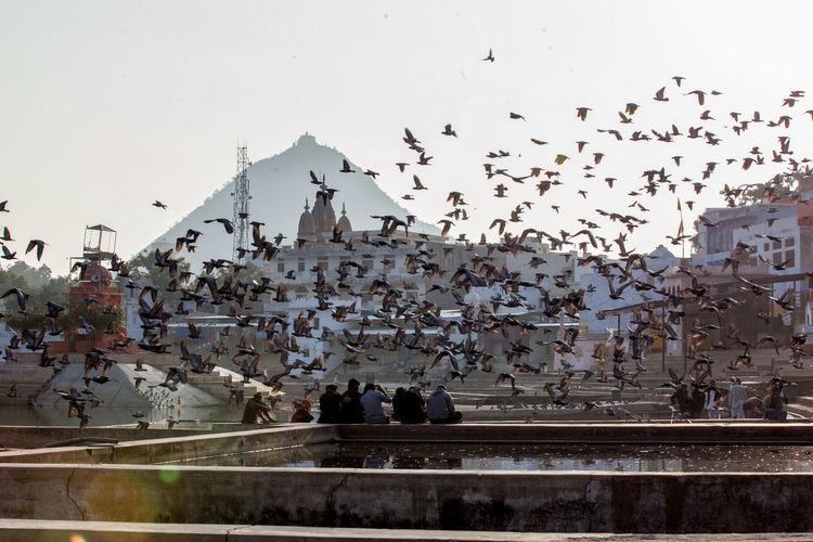 Flock of birds flying over people against sky
