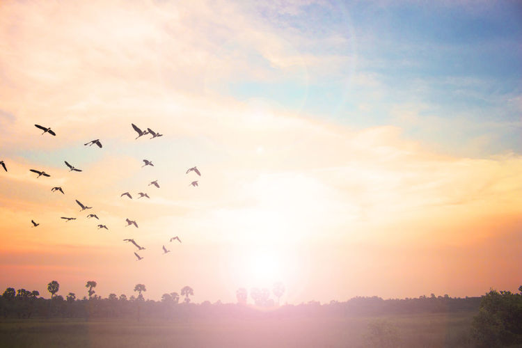 Low Angle View Of Silhouette Birds Flying Over Landscape Against Sky During Sunset