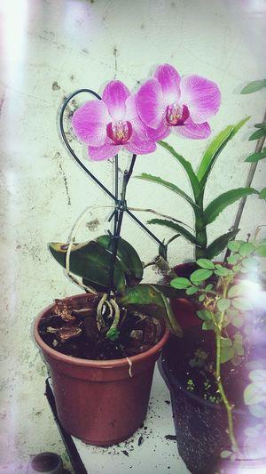 Flora Natural
