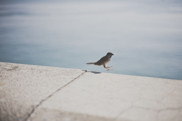 Animal Themes Animals In The Wild Beak Beauty In Nature Bird Calm Coastline Day Focus On Foreground Lakeside Nature No People Non-urban Scene Ocean One Animal Sea Seascape Selective Focus Solitude Surface Level Tranquil Scene Tranquility Water Wildlife Zoology