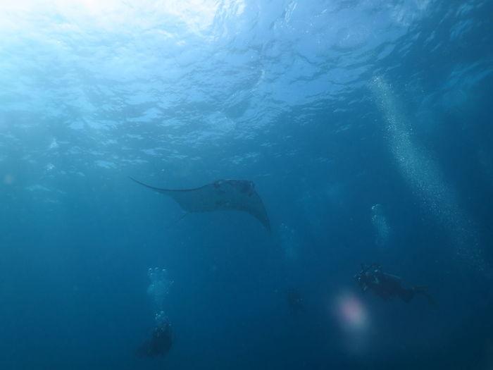 Scuba divers by fish swimming in sea