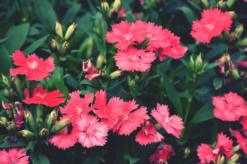 Growth Flower Nature Beauty In Nature Petal Leaf Freshness Fragility Outdoors Plant Day Blooming Flower Head No People Close-up