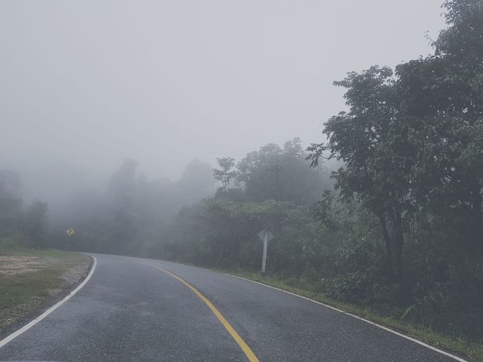 Tree Road Fog
