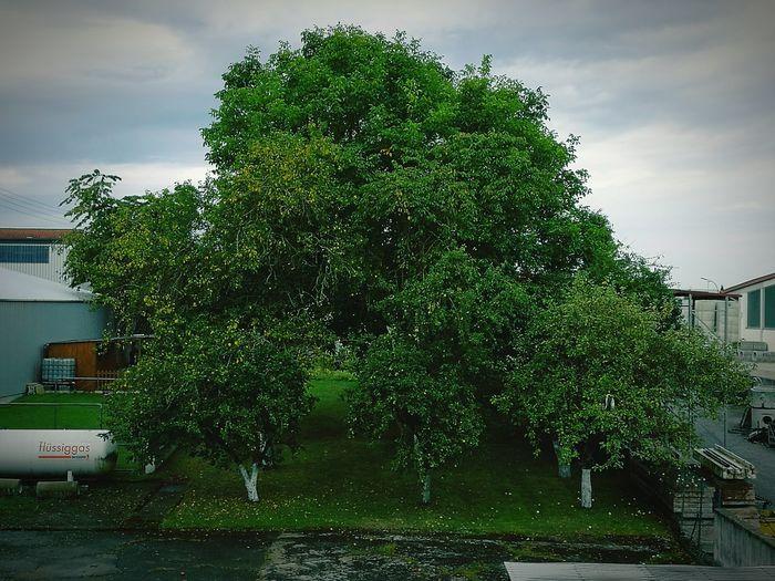 Ein Fleckchen grün in mitten der Industrie. Ein kleiner Ort des Friedens.Tree Cloud - Sky Nature Town Day Cloudy No People Hope Outdoors Hopefull First Eyeem Photo