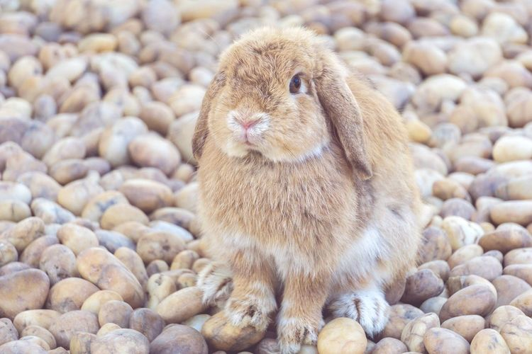 Animal Wildlife No People Nature Animal Themes Beach One Animal Animals In The Wild Close-up Outdoors Day Bird MammalrRabbitrRabbit - AnimalrRabbits 🐇PPets