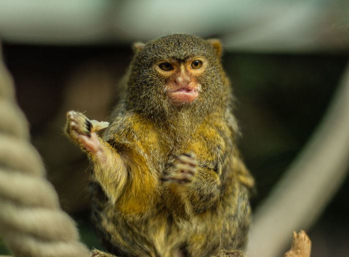 Camera - Canon 550D -Lens - 50 mm f/1.8 Blog : https://www.instagram.com/david_sarkisov_photography/ Animal Wildlife Animals In The Wild Primate Mammal One Animal Vertebrate No People Portrait Day Close-up Nature Selective Focus Focus On Foreground Outdoors Looking At Camera Sitting