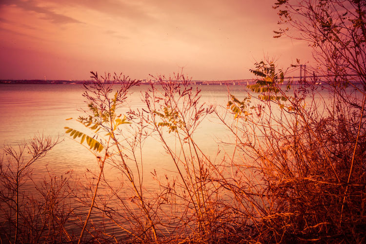 Awe Backgrounds Beauty In Nature Day Horizon Over Water Landscape Multi Colored Nature No People Outdoors Plant Riverview Park, Pennsville NJ Romantic Sky Scenics Sky Sun Sunset Tree Vacations Water
