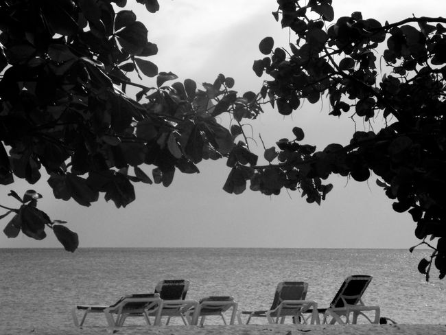 Beach Beauty In Nature Chair Cuba Cuba Collection Cuban Cuban Cars Cuban Life Cuban Lifestyle Cuban Style Day Growth Horizon Over Water Leaf Nature No People Outdoors Scenics Sea Sky Summer Tranquility Tree Vacations Water