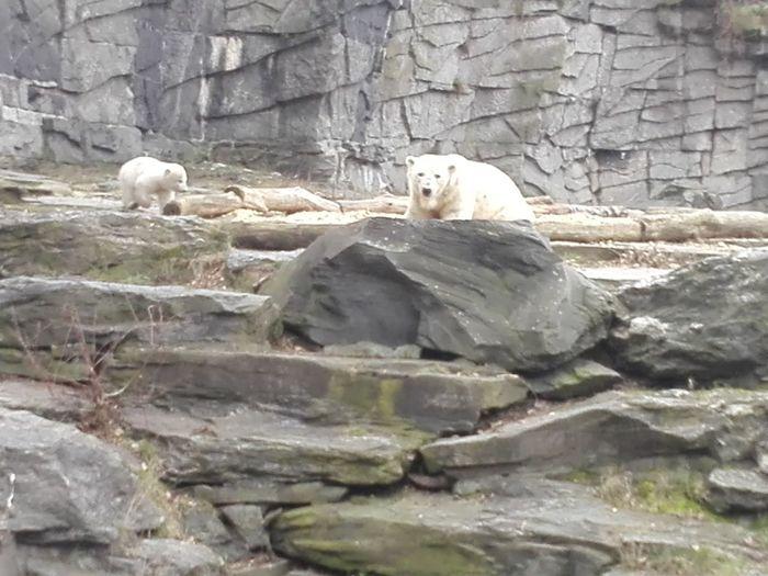 Young Polar