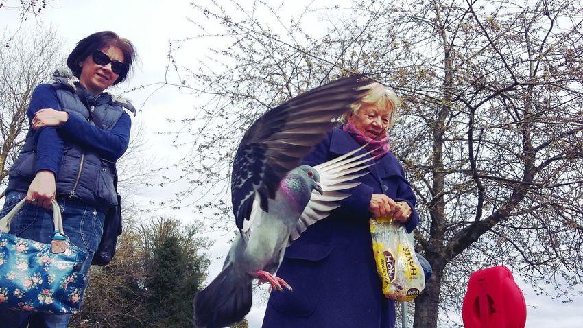 EyeEm Birds Birds Pigeon In Flight Flap Feeding The Birds Feeding Pigeons Passing Time Eyeem England England Beautiful Shot Gallery EyeEmbestshots Caught In The Moment