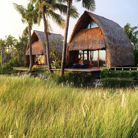 Huts at Wyndham Jivva Resort in Bali Thatched Roof Architecture Building Exterior Built Structure Hut Cottage Nature No People Grass House Palm Tree Outdoors Sky Bali, Indonesia