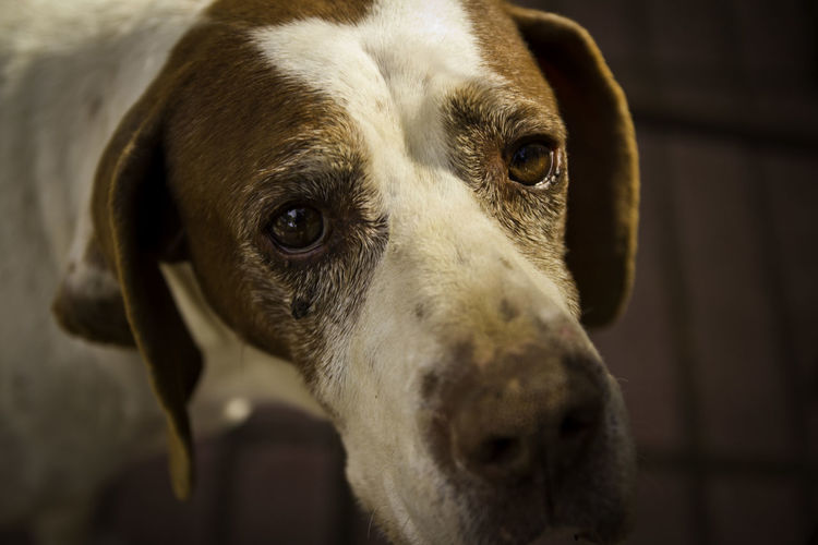 Animal Themes Bestfriend Close-up Dog Domestic Animals Hound Mammal One Animal Pets Portrait Selective Focus