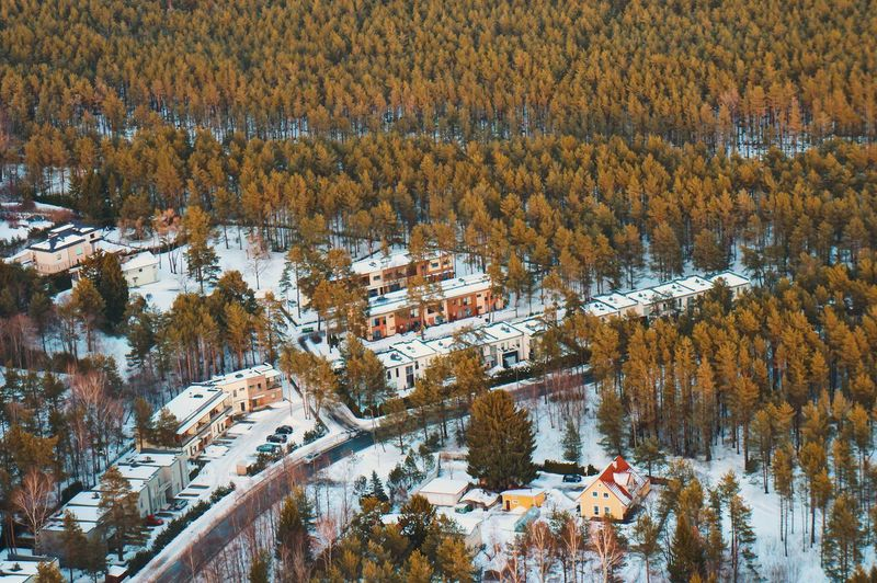 High angle view of pine trees during winter