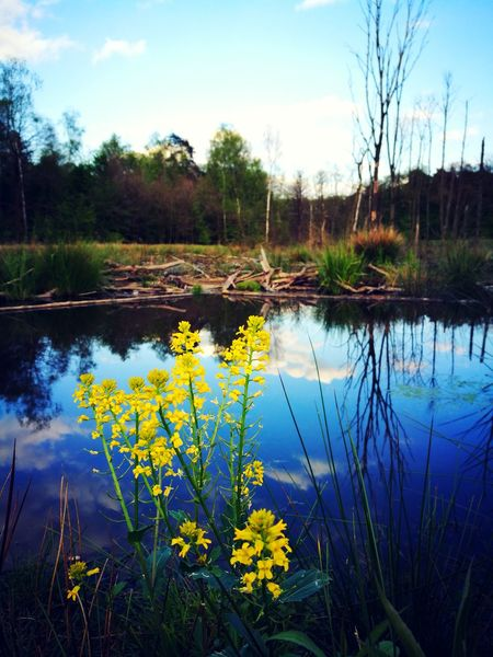 EyeEmNewHere The Week On EyeEm Lake Water Nature Reflection Landscape Sky Flower Cloud - Sky Outdoors Beauty In Nature Uncultivated Wilderness Plant Tree Springtime Swamp No People Grass Nature Reserve Scenics EyeEm Best Shots - Nature