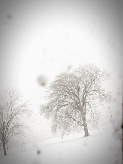 Snowstorm2016 Frozen Window EyeEm Nature Lover Snowy Tree Eyemnaturelover Beautiful Day Beautiful Snowday Nature_collection Let It Snow Ice Snow Passenger View Passenger Side View Snowflakes Mothernature