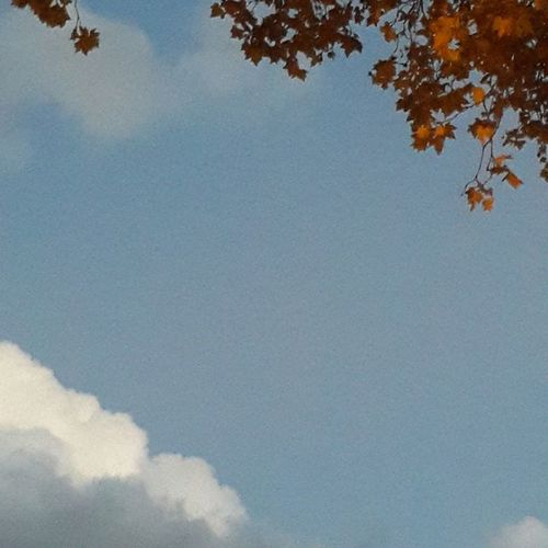 Otoño en el cielo. Peace Sky Instamood Dayoff Wonderful_places @worlderlust Bluesky Cielodeldia Danowens