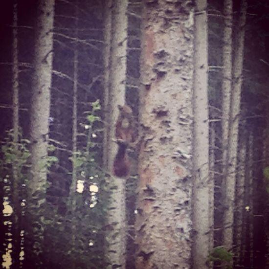 Squirrel Watchin U Eichhörnchen