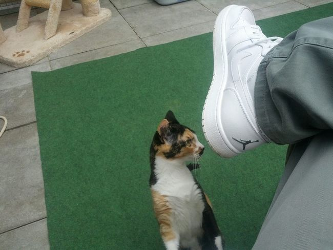 Cat Lovers Cat♡ Cats Of EyeEm Cats 🐱 Cats Cat Jordans Air Jordan Jordan Sneakers