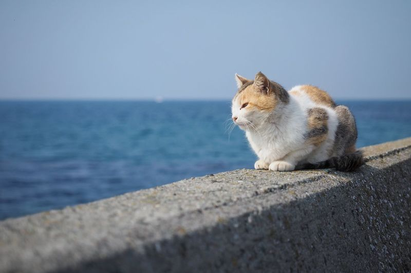 Long Goodbye Thinking Cat Lonely Missing Domestic Cat Animal Themes Sea Pets One Animal Outdoors Day Sitting Retaining Wall Water No People Horizon Over Water Beauty In Nature Close-up Sky Cat