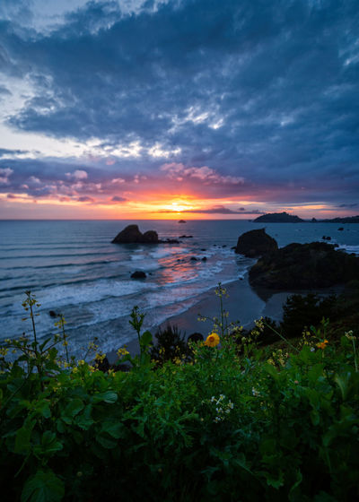 Sunset over Trinidad, California. Sky Water Sunset Beauty In Nature Scenics - Nature Sea Cloud - Sky Tranquil Scene Tranquility Nature Plant No People Land Beach Idyllic Orange Color Growth Horizon Horizon Over Water Outdoors Flower Daisies Landscape Landscape_Collection Seascape