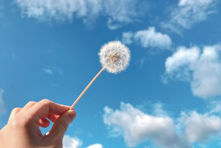 Low angle view of hand holding dandelion against sky