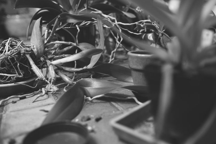 Abandoned Blackandwhite Close-up Day Decay Growth Leaf Nature No People Outdoors Plant Selective Focus