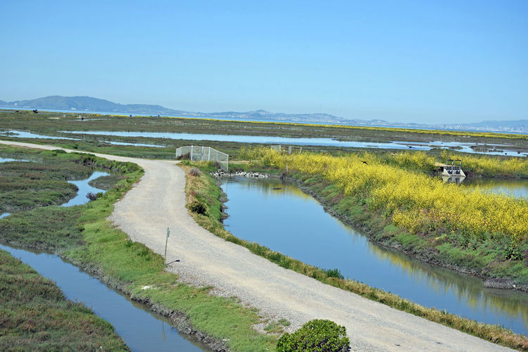Hayward Shoreline Regional Park 1 Tidal Wetlands Former Landfill MarshRecently Restored Salt Marsh 1997 Former Commercial Salt Flats Shores Of San Francisco Bay San Francisco Bay Trail Wild Mustard Irrigation Gates San Francisco Skyline Birdwatchers Hangout