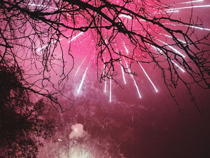 Fireworks EyeEmNewHere EyeEm Best Shots EyeEm Nature Lover Night Photography Fireworks Firework Display Tree Plant Beauty In Nature Branch Pink Color Low Angle View Nature Scenics - Nature Tranquility Tranquil Scene Idyllic Sky Illuminated