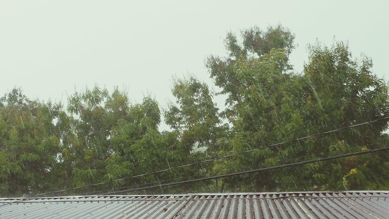 Tropical storm warning! Weather It's Raining Tropical Storm Erika Caribbean Puerto Rico