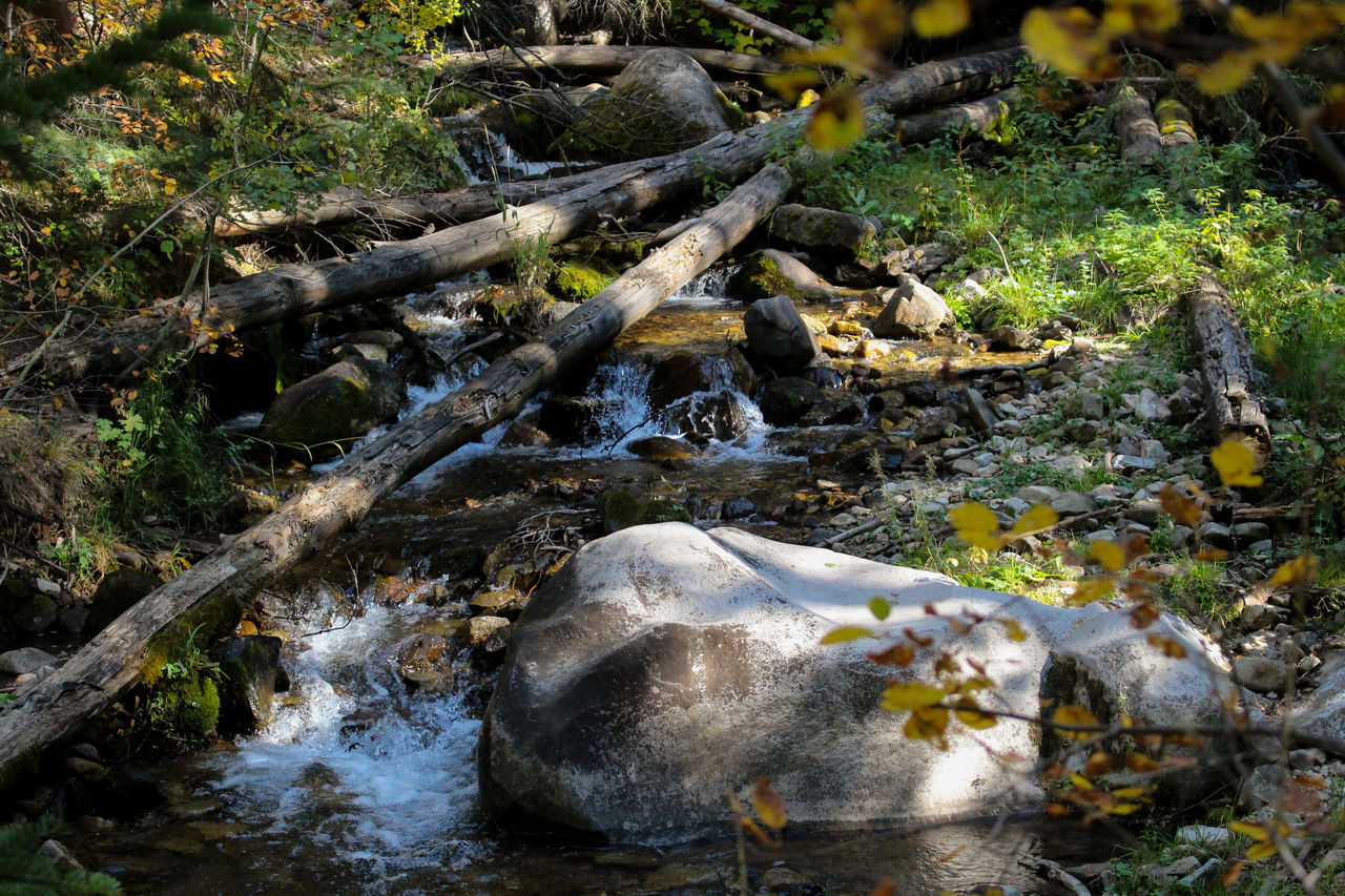 nature, water, day, rock - object, no people, outdoors, beauty in nature, plant, motion, growth, tree, animal themes, close-up