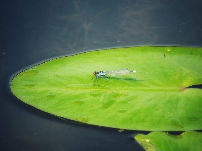 Close-up of grasshopper on a lake