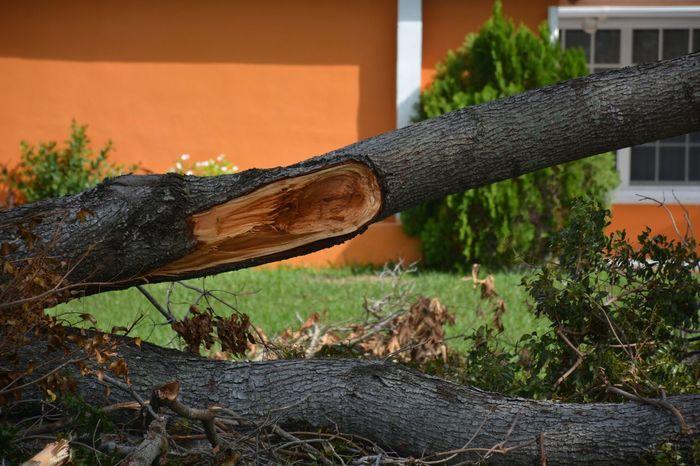 downed by Hurricane Irma Hurricane Irma 2017 Hurricane Damage Storm Debris South Florida Storm Damage Debris Damages Outdoors No People Tree TreePorn Hurricane Season  Downed Trees Aftermath Fallen Tree Downed Tree Roadside Hurricane Close-up