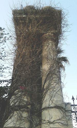 la tenacia del rampicante Life Wild Antichita Colonne Villeantiche Ville Sicilia Nature Naturepower