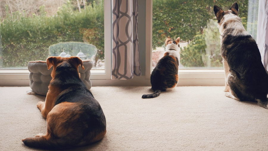 Family Togetherness Friendship Love Quality Time Indoors  Domestic Animals Domestic Pets Domestic Relaxation Relaxing Watching Canines Dogs Two Dogs Windows Domestic Animals Reflection EyeEm Selects Dog Low Section Sitting Window Sill Cat Feline At Home Kitten Ginger Cat Pampered Pets Domestic Cat