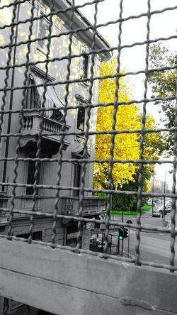 Yellow Tree Eyeemphotography Urban Architecture Details Tree_collection  EyeEm Gallery CreativePhotographer