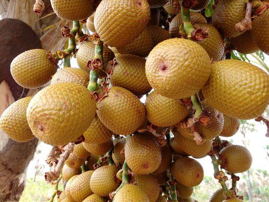 Doce de buriti Buriti Fruit Outdoors Nature Close-up Brazil EyeEmNewHerе Clickbyjoniocosta Roraima