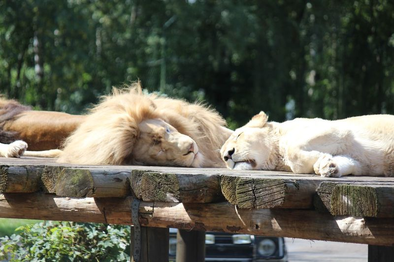 View of cats sleeping on wood