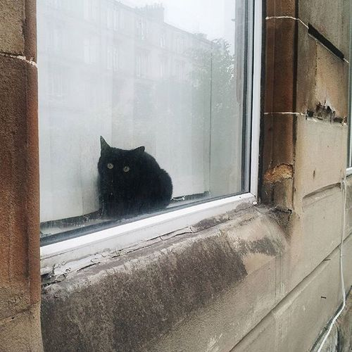 Hello again pal! Dennistoun Glasgow  Ig_glasgow Instaglasgow Igersglasgow Igersscot IgersScotland Insta_Scotland Instascotland Vscocam VSCO Vscotland VisitScotland Explorescotland Ig_Scotland Catofinstagram Black Window