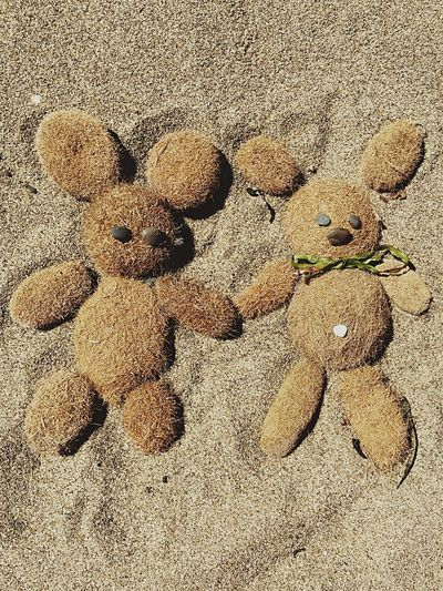 Lifestyles Fun Summertime Wallpaper Beach Sand & Sea Peluches Animal Little Bear Bear Shell Sand Funny Holidays Summer Lovely Love Background Backgrounds Play