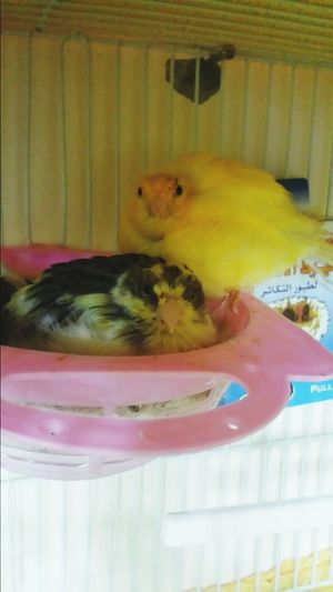 my Birdies all puffed up and Cuddly
