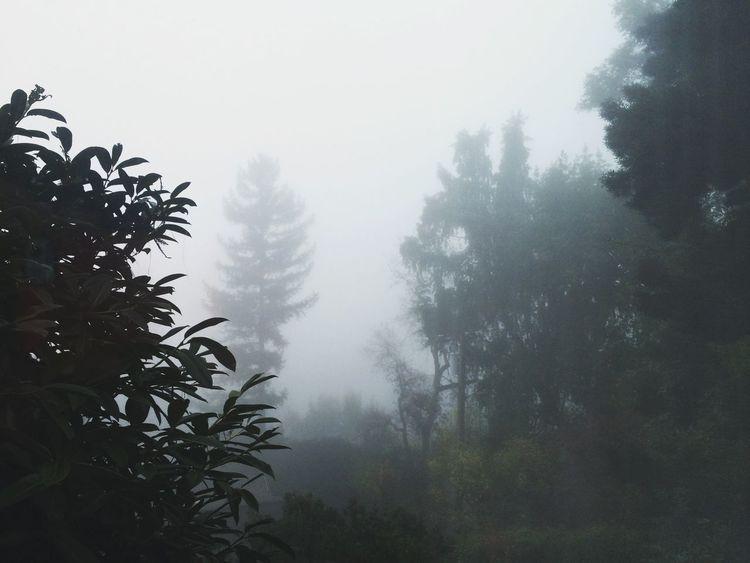 Fog Foggy Morning Marin County CA My Happy Place