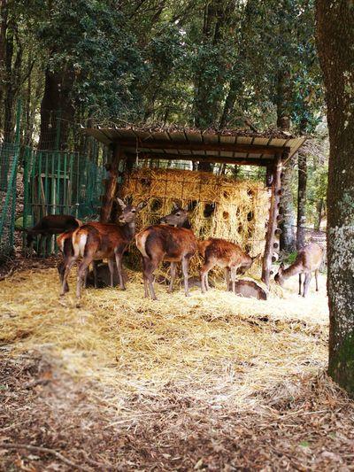 good day...😊🙋 Sardinia Sardegna Italy  Sardinia Sardegna Tree Young Animal Togetherness Field Livestock Livestock Tag Medium Group Of Animals