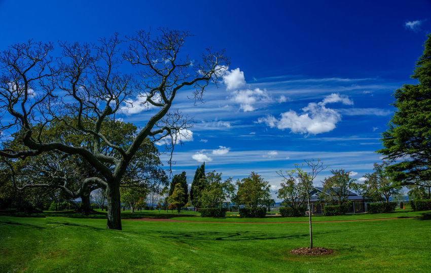 Cornwall Park. Auckland, New Zealand. Auckland Beauty In Nature Blue Cloud Cloud - Sky Cornwallpark Field Grass Grassy Green Color Growth Idyllic Landscape Lawn Meadow Nature Newzealand Outdoors Scenics Sky Sunlight The Essence Of Summer Tranquil Scene Tranquility Tree