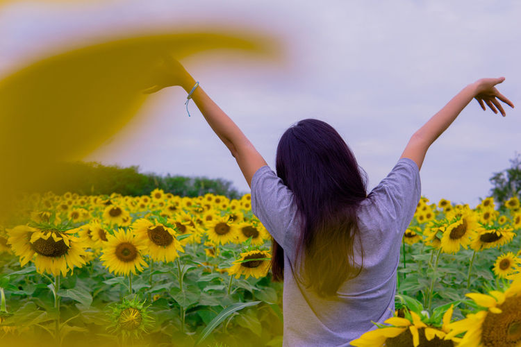 Rear view of woman standing on sunflower field