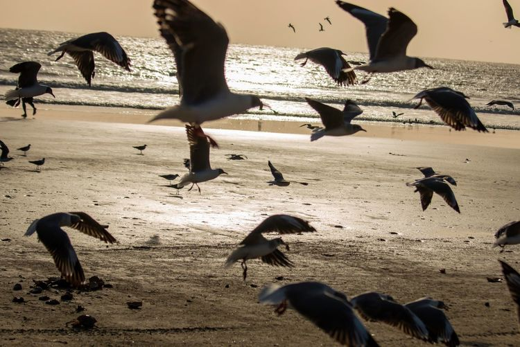 Close-up of birds flying at beach during sunset