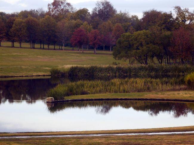 Tree Water Autumn Landscape Sky