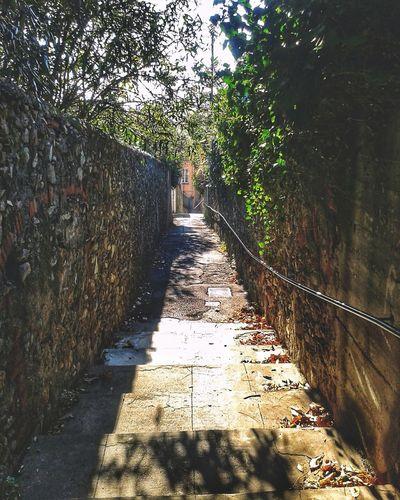 Creuza. Salita Creuza Smartphone Photography Mobilephotography S3 Mini Tree Shadow Sunlight Pathway Walkway Narrow Diminishing Perspective Paved